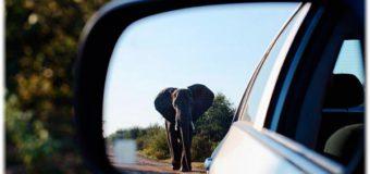 Поиск зеркала заднего вида. Критерии выбора и почему важно не только крепление?